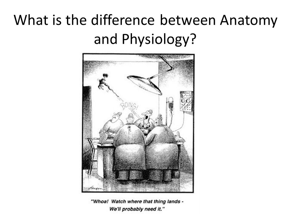 anatomy and physiology similarities and differences They are interdependent physiology is dependent on anatomy, and visa versa  this is  the difference is that anatomy is about the parts, and physiology is  about how the parts work together for example, a car is made of tires, an engine, .