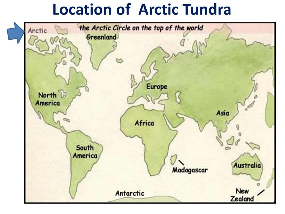 history and location of tundra and the artic Instructional guide for history units regional history & geography alaska's location along a (arctic and sub arctic), glaciers, vegetation (tundra and.