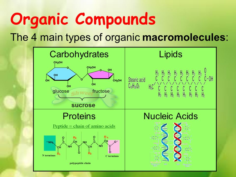the characteristics of the main macromolecules nucleic acids lipids and carbohydrates The first step is to discuss the structure and basic functions of cells  all cells,  regardless of their function or location in the body, share common features and  processes  carbohydrates proteins lipids nucleic acids combinations.