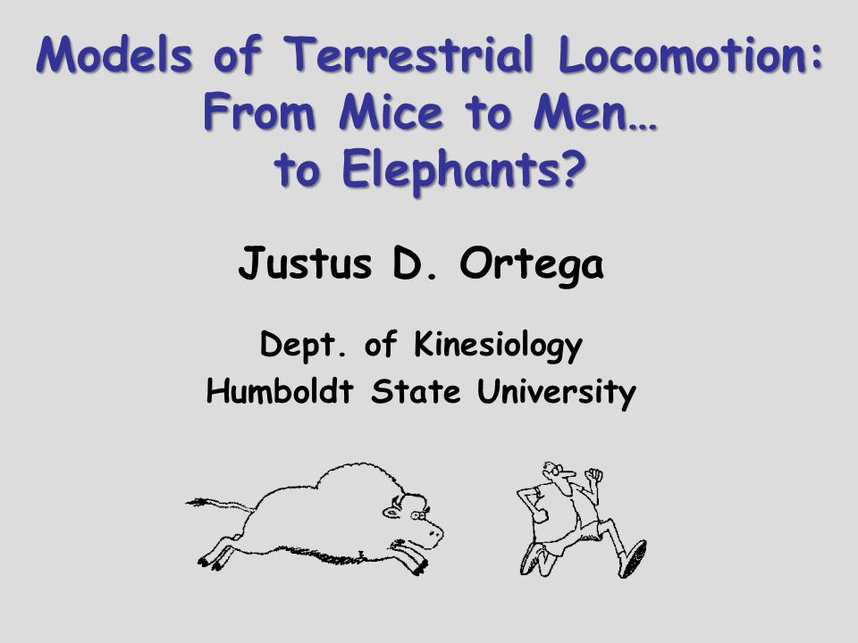 Models of Terrestrial Locomotion: From Mice to Men… to Elephants