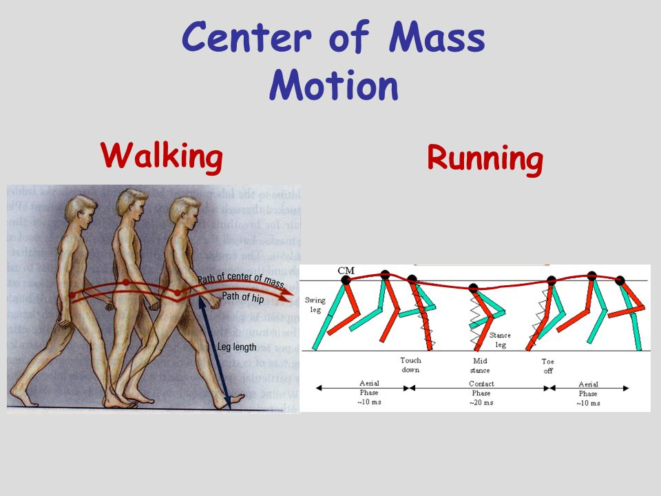 Center of Mass Motion Walking Running Describe CoM motion in walking
