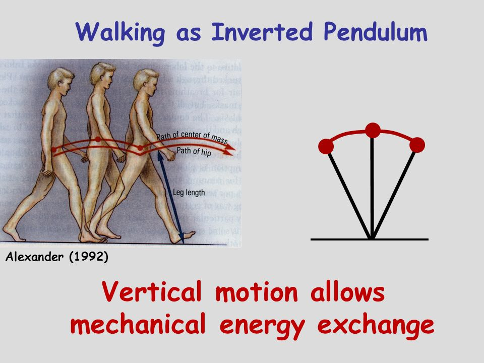 Vertical motion allows mechanical energy exchange