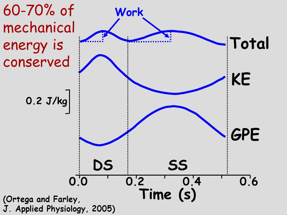 Total KE GPE 60-70% of mechanical energy is conserved DS SS Time (s)