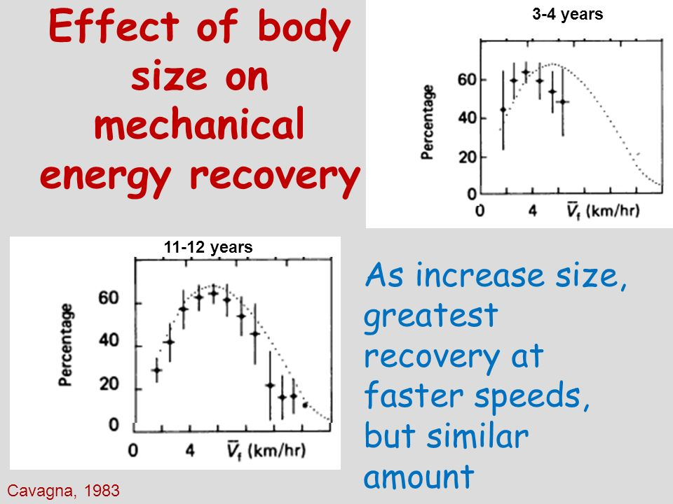 Effect of body size on mechanical energy recovery