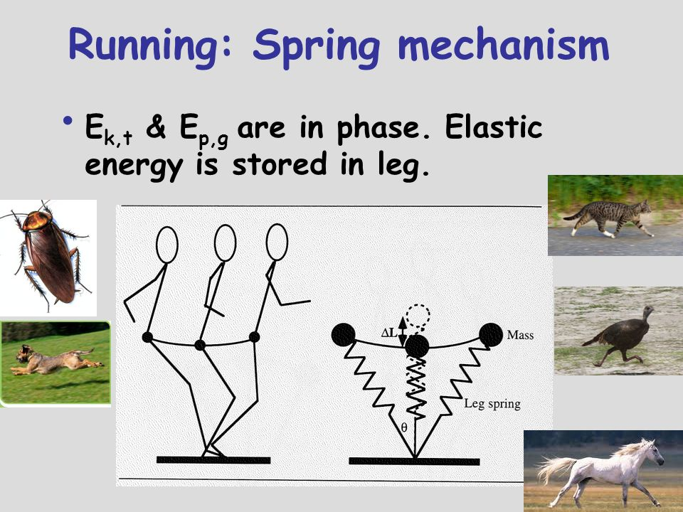 Running: Spring mechanism