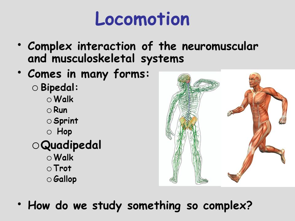 Locomotion 4/26/2017 5:22:02 AM. Complex interaction of the neuromuscular and musculoskeletal systems.