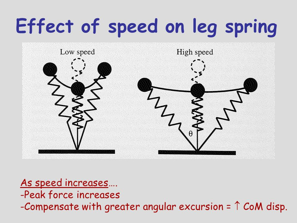 Effect of speed on leg spring