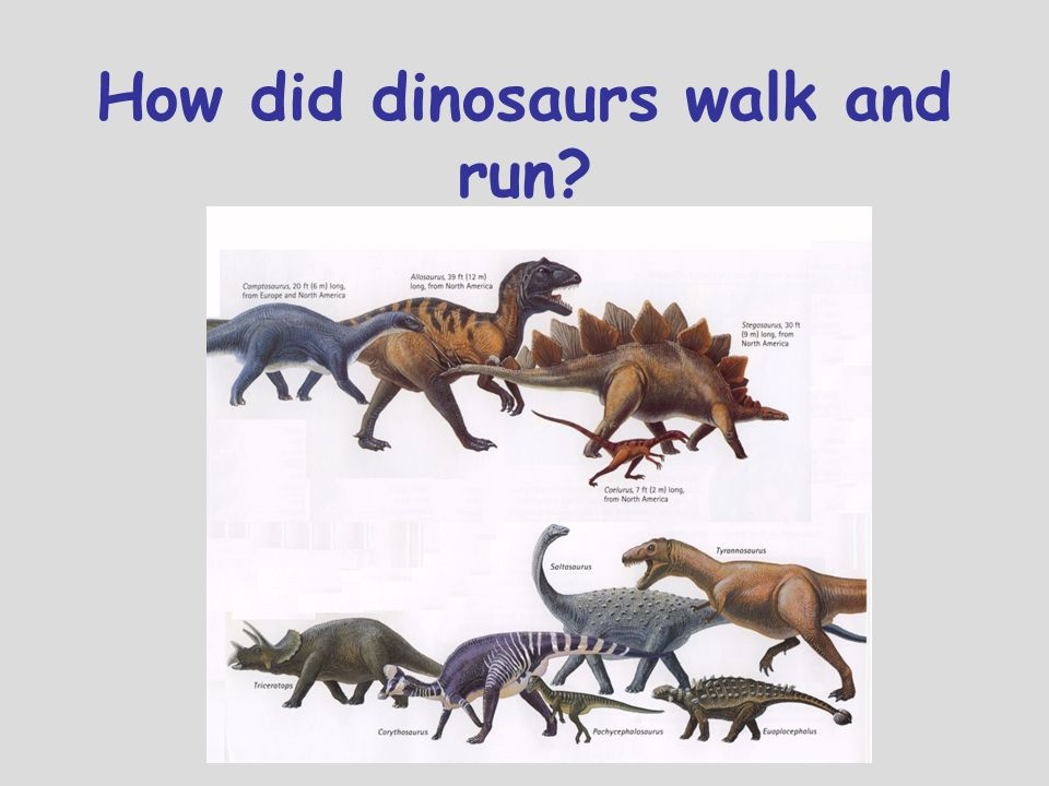 How did dinosaurs walk and run
