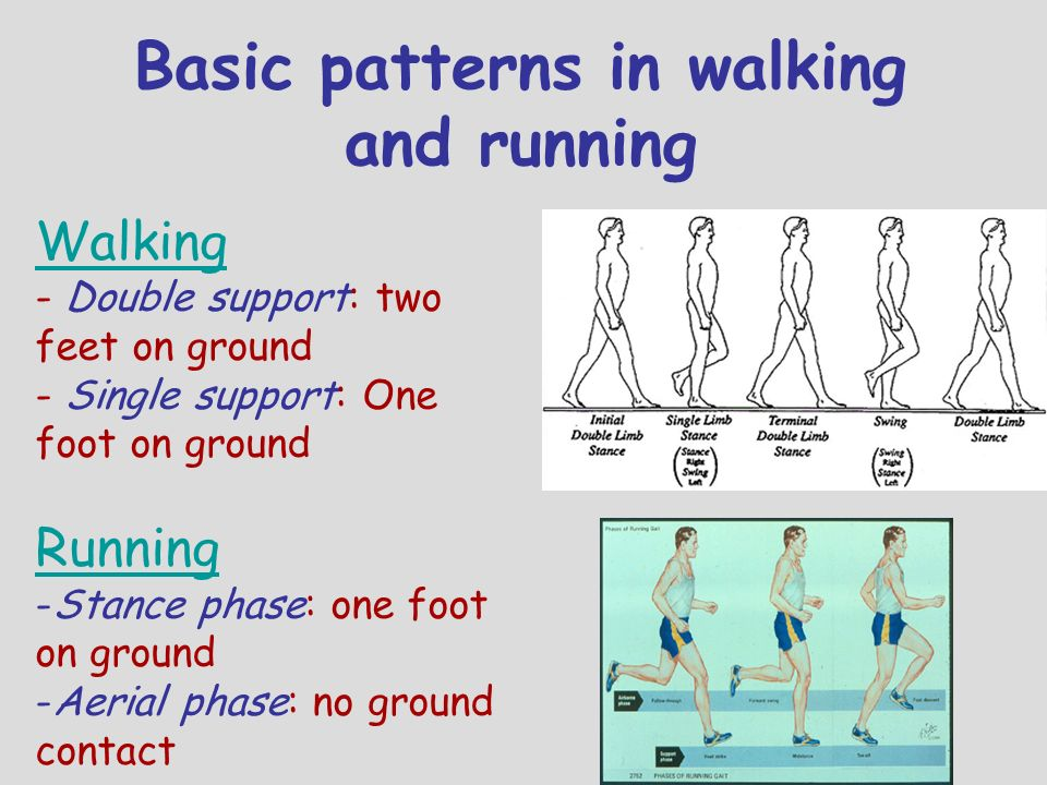 Basic patterns in walking and running