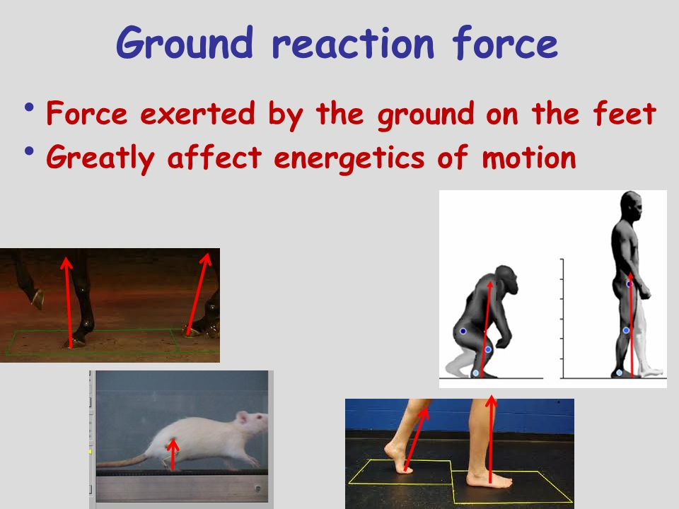 Ground reaction force Force exerted by the ground on the feet