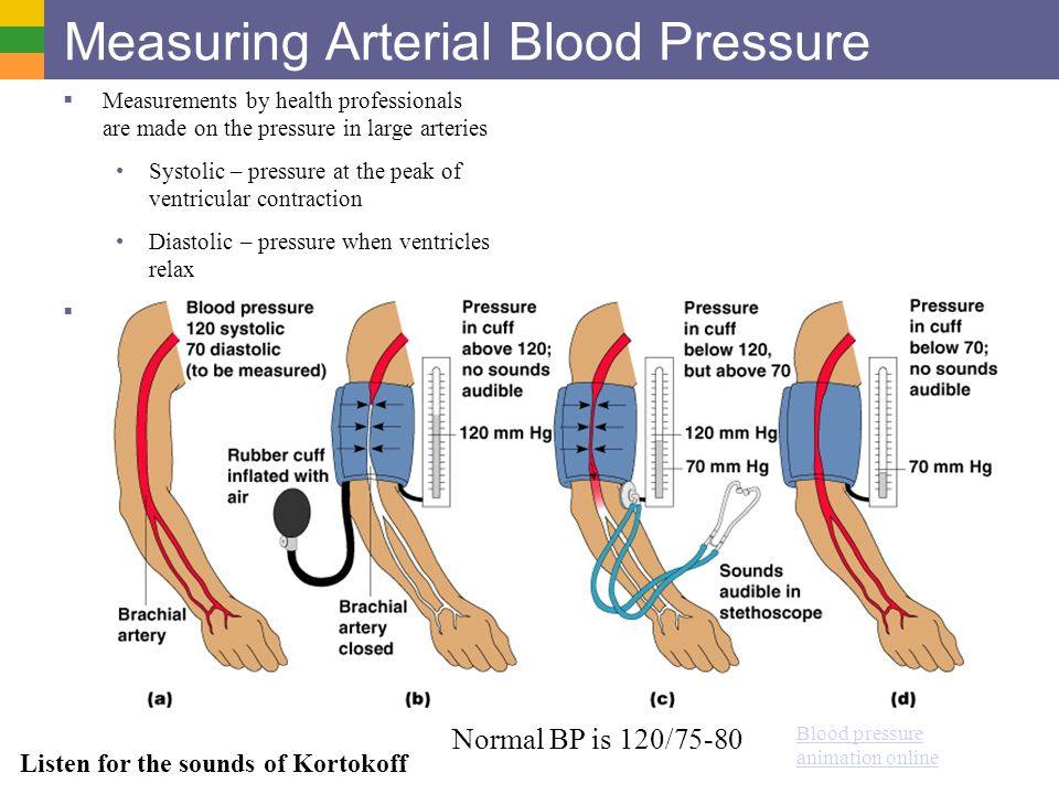 Cardio System II: Vasculature and Pressure - ppt video ...