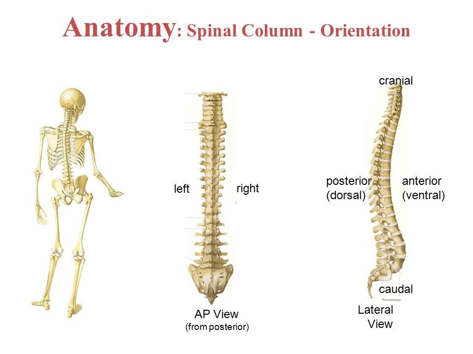 Anatomy of a column