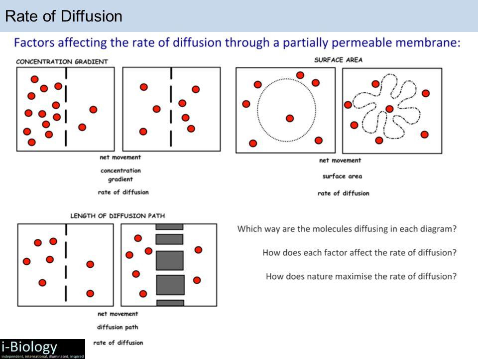 Four Things That Affect Rate of Diffusion