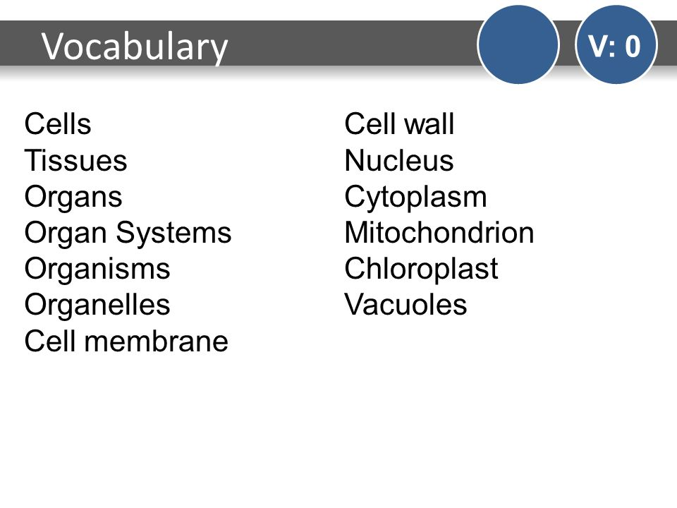 an introduction to the nucleus cell wall and the organs in the cell Animal cells are typical of the eukaryotic cell, enclosed by a plasma membrane and containing a membrane-bound nucleus and organelles unlike the eukaryotic cells of plants and fungi, animal cells do not have a cell wall this feature was lost in the distant past by the single-celled organisms that .