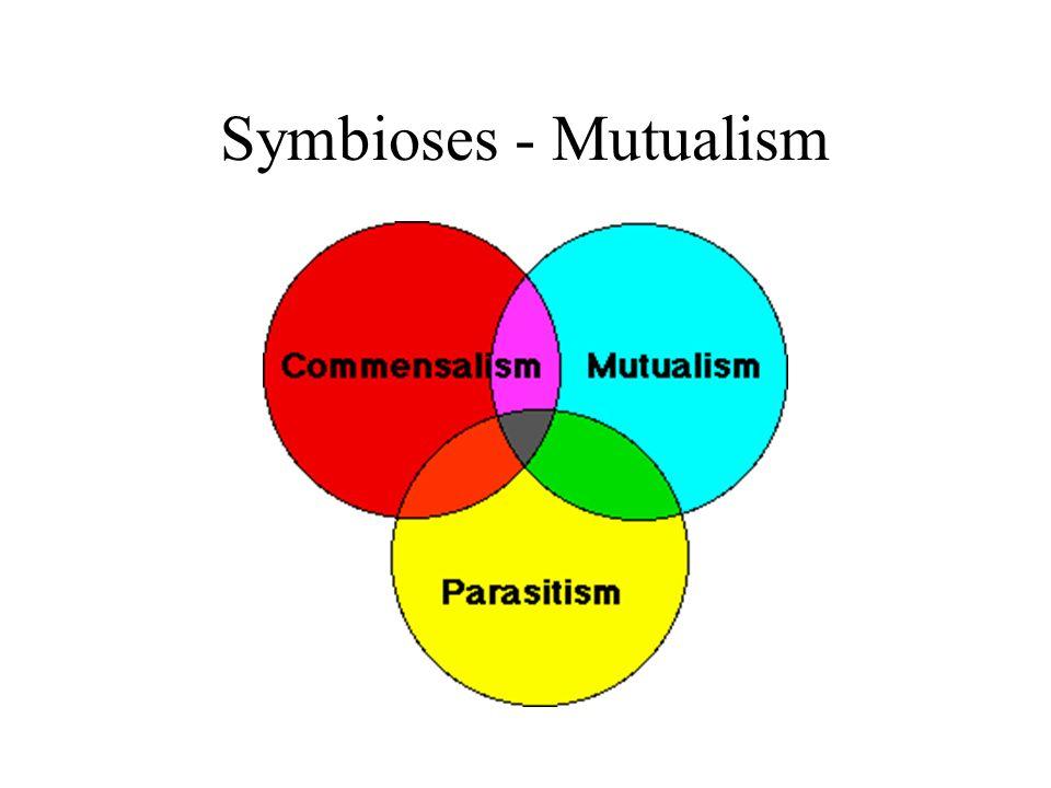 symbiotic relationships mutualism essay
