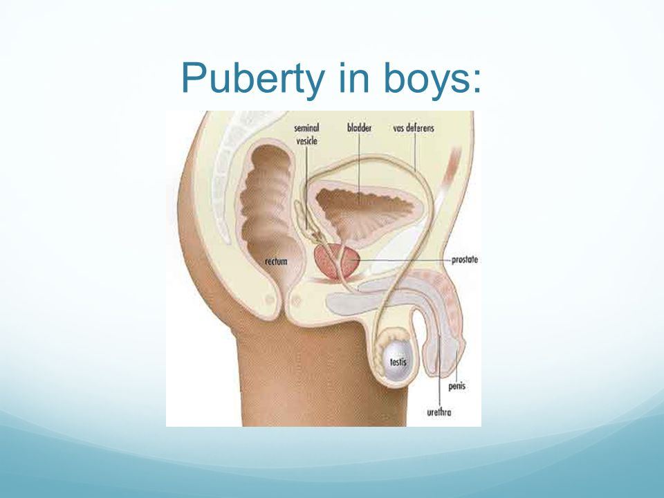 Puberty in boys: