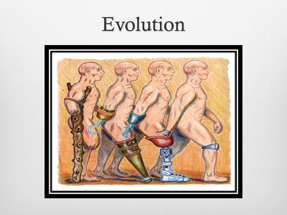 a history of the evolution of prosthetics A brief history of prosthetics facebook twitter  the medical world has come a long, long way in terms of the evolution of prostheses (or prosthetic limbs).