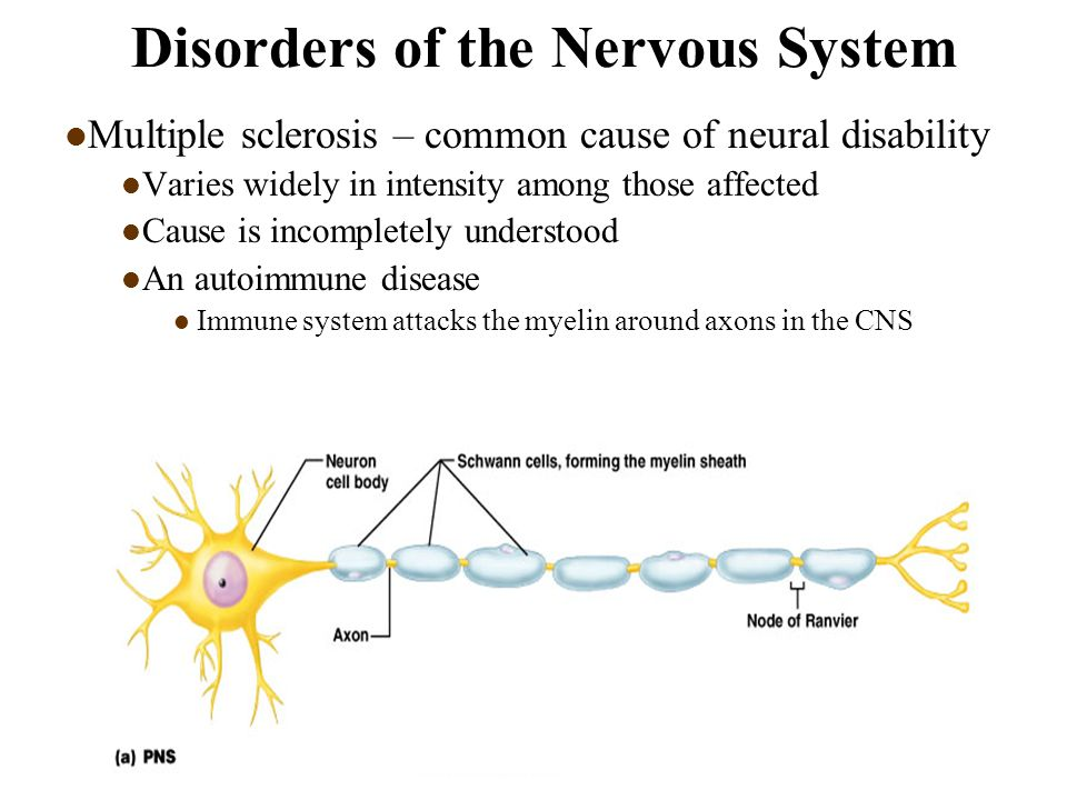 nervous system diseases I'm still doing my best to answer everybody sometimes i get backlogged, sometimes my e-mail crashes, and sometimes my literature search software crashes.
