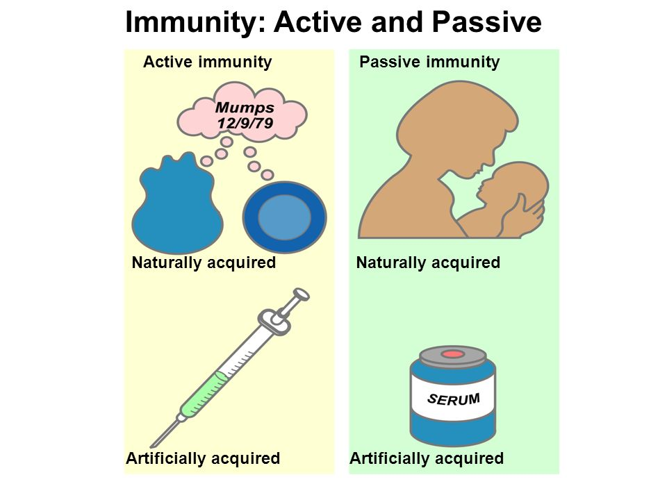 active immunity Study flashcards on active vs passive immunity at cramcom quickly memorize the terms, phrases and much more cramcom makes it easy to get the grade you want.