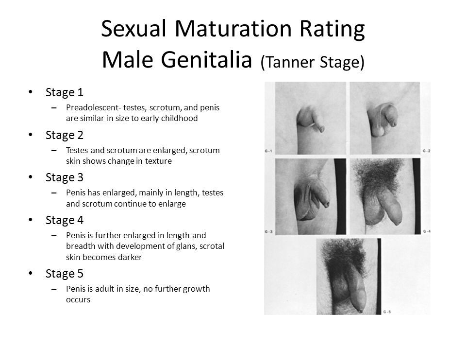 Sexual Maturation 28