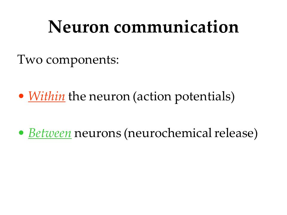neuron communication Neuron to neuron communication axons branch out and end near the dendrites of from psychology 101 at washington township high school.