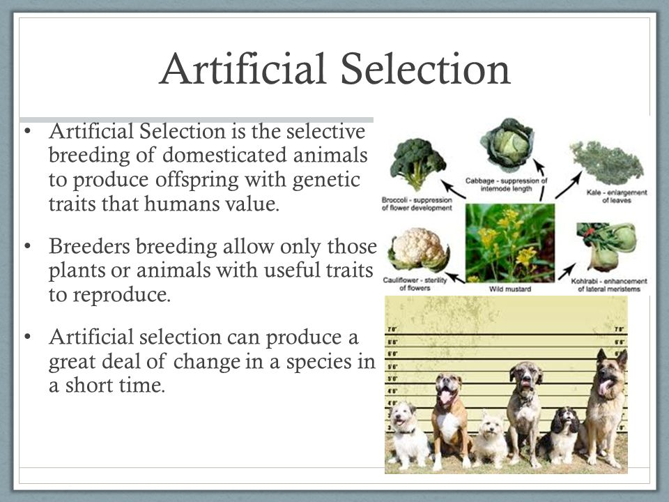 The Mechanism of Evolution - ppt video online download