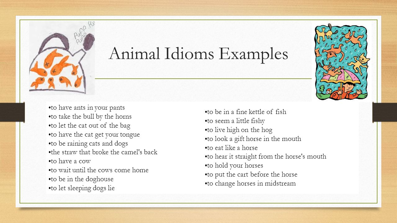 Animal Idioms Examples Choice Image Example Cover Letter For Resume