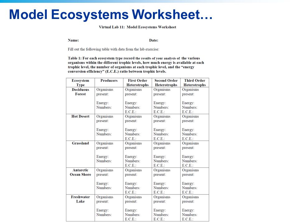 Ecosystems Worksheets Middle School Ecosystems Best Free