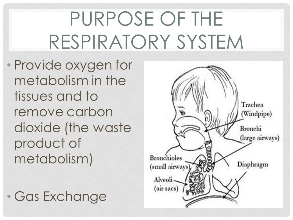 Carbon Dioxide Removal Systems : Management of illness respiratory ppt download
