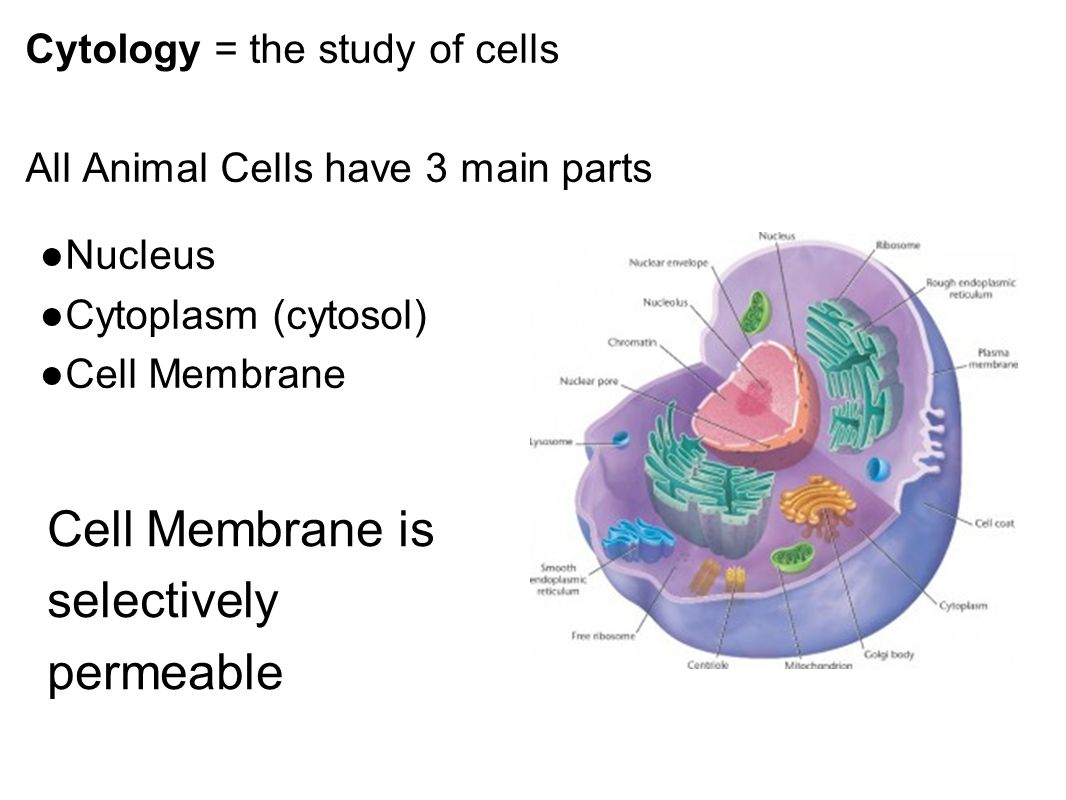 Unique Cell Anatomy And Physiology Ppt Images - Physiology Of Human ...