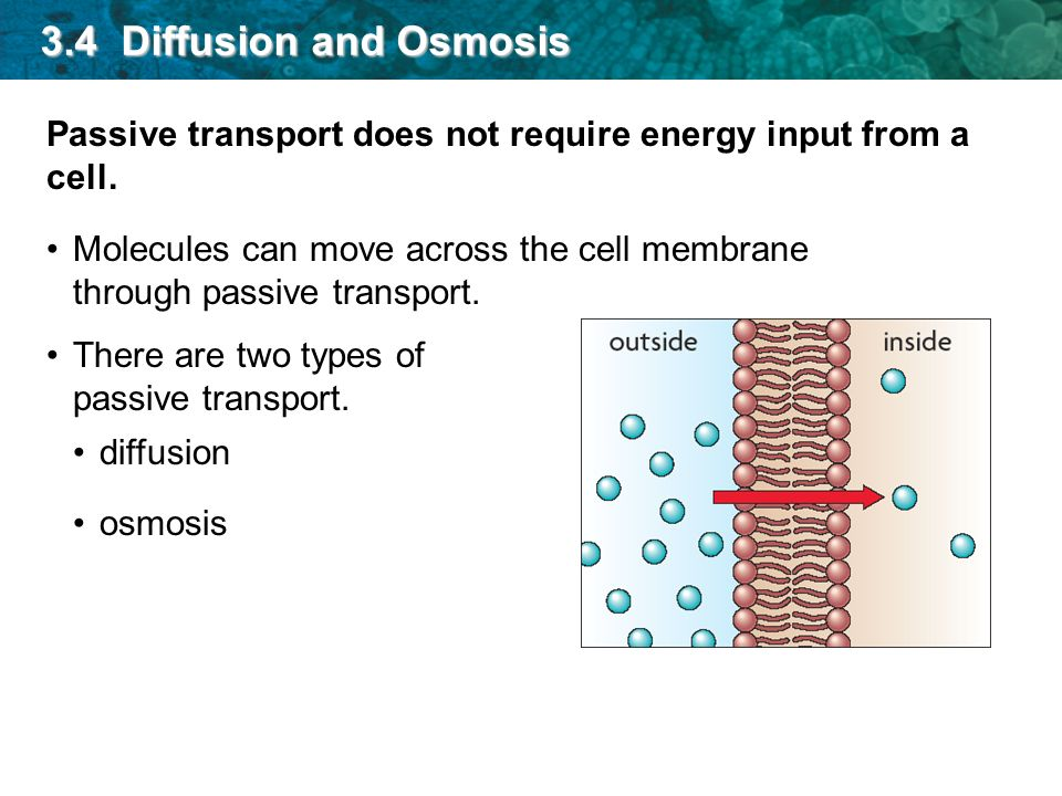 osmosis and particles diffusion Learn about diffusion, osmosis, and concentration gradients and why these are  important to cells.