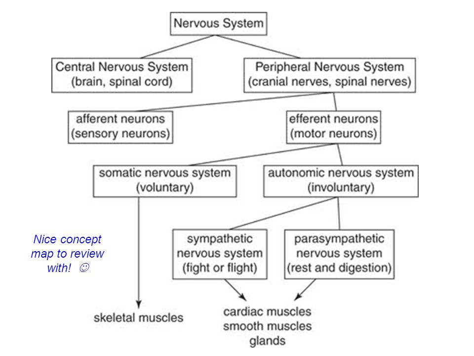 Nervous System Chapter Ppt Video Online Download. Photography Classes Online Degree. Financial Planning Worksheet Excel. Home Remedy For Eye Allergy Air Con Service. Philadelphia Mortgage Advisors. Where To Invest In Stock Market. Best Credit Cards To Own 3 Fico Credit Scores. How Much Money Can You Make Day Trading. Scottsdale Culinary School Www Salesjobs Com