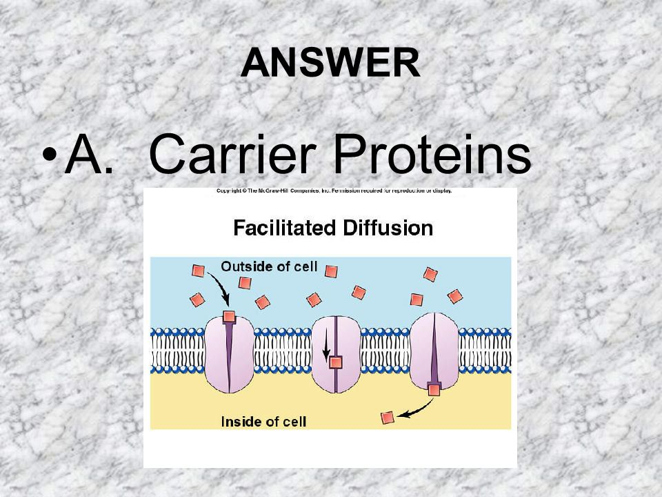 ANSWER A. Carrier Proteins