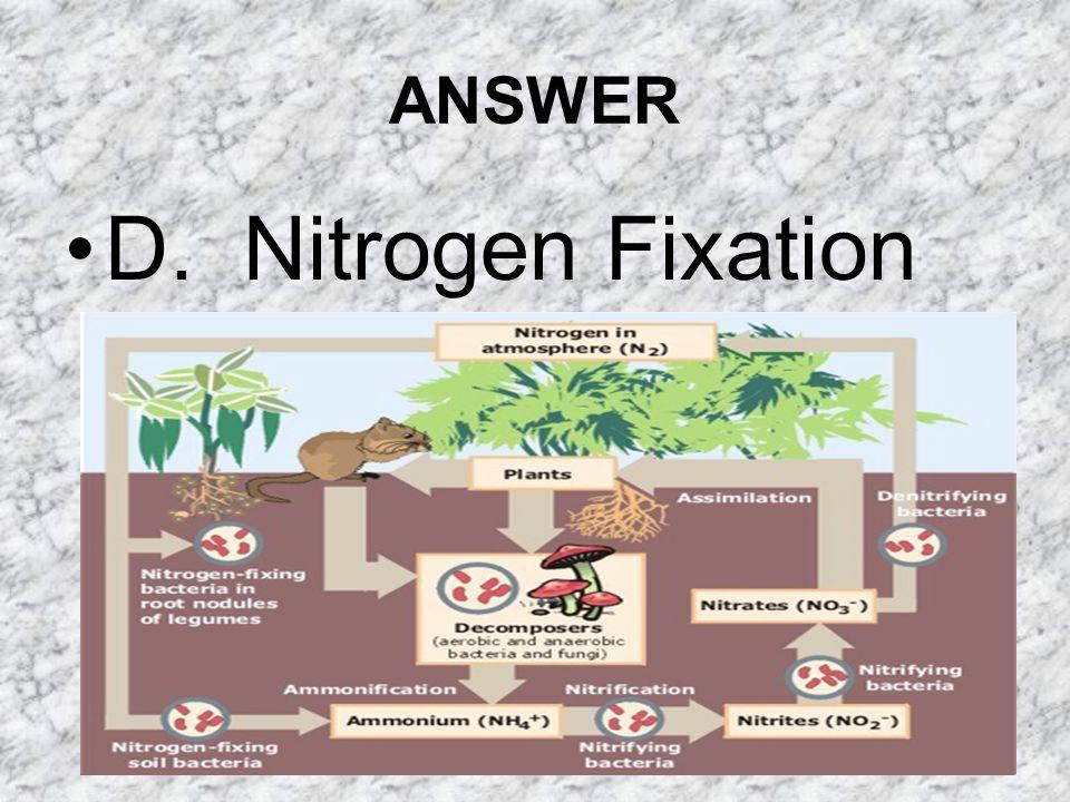 ANSWER D. Nitrogen Fixation