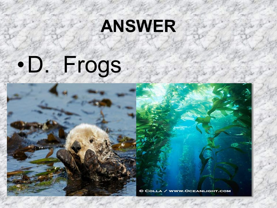 ANSWER D. Frogs
