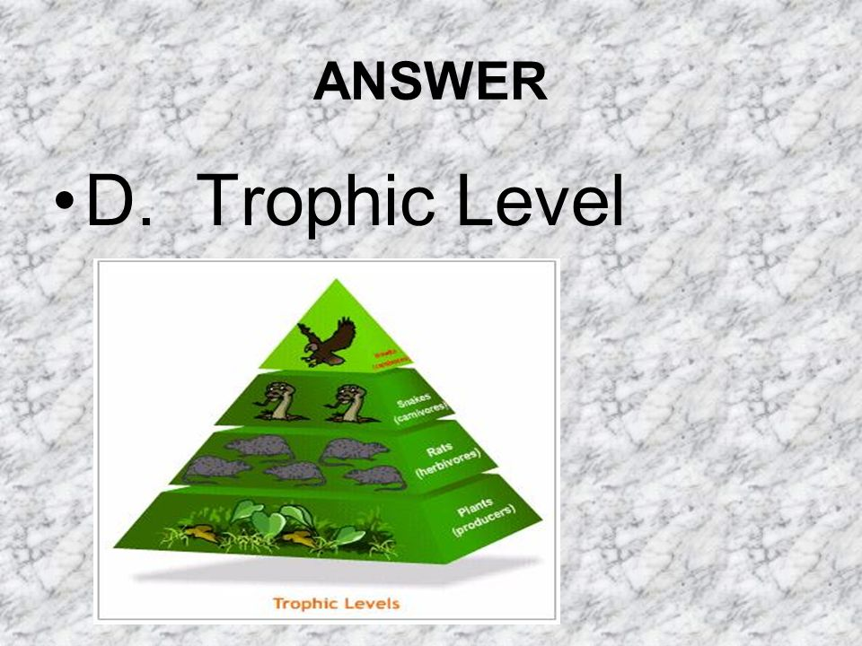 ANSWER D. Trophic Level