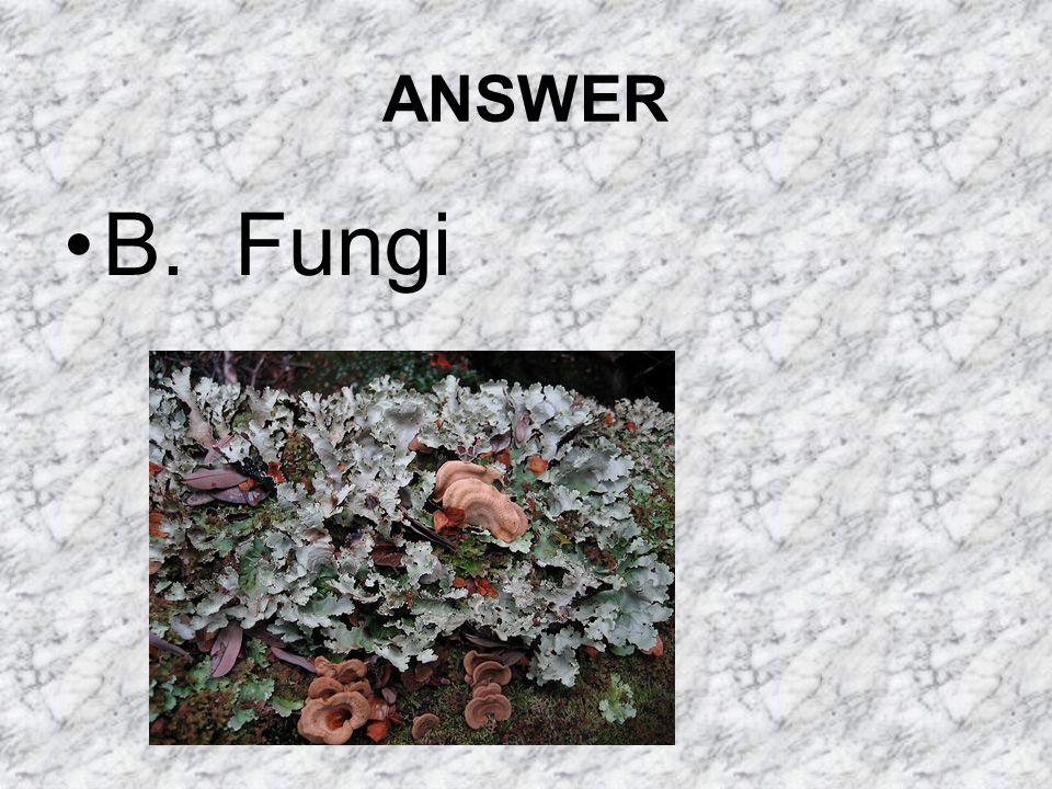 ANSWER B. Fungi