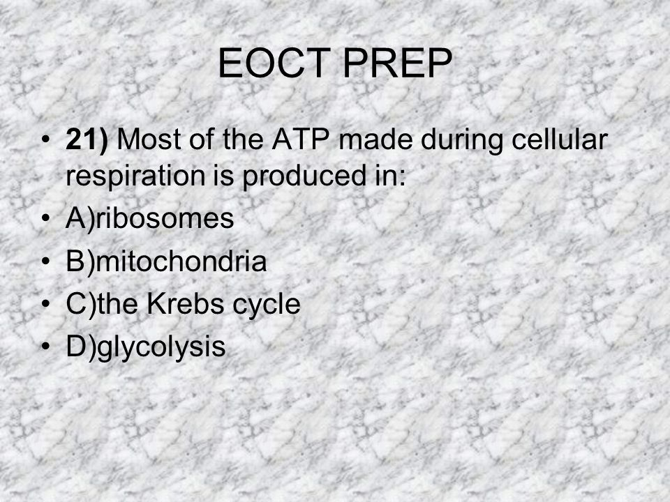 EOCT PREP 21) Most of the ATP made during cellular respiration is produced in: A)ribosomes. B)mitochondria.