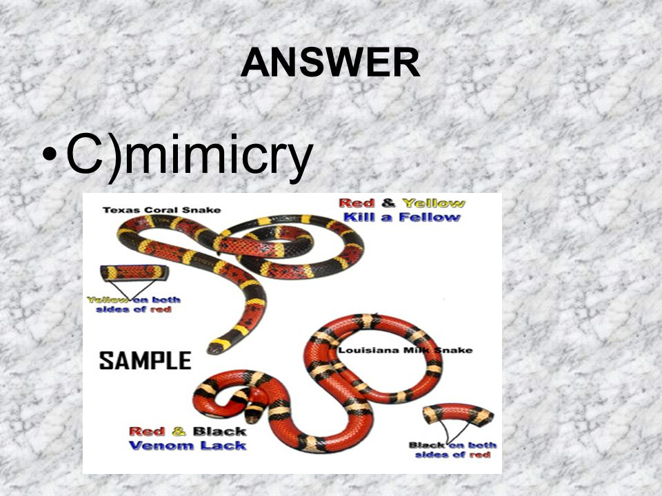 ANSWER C)mimicry