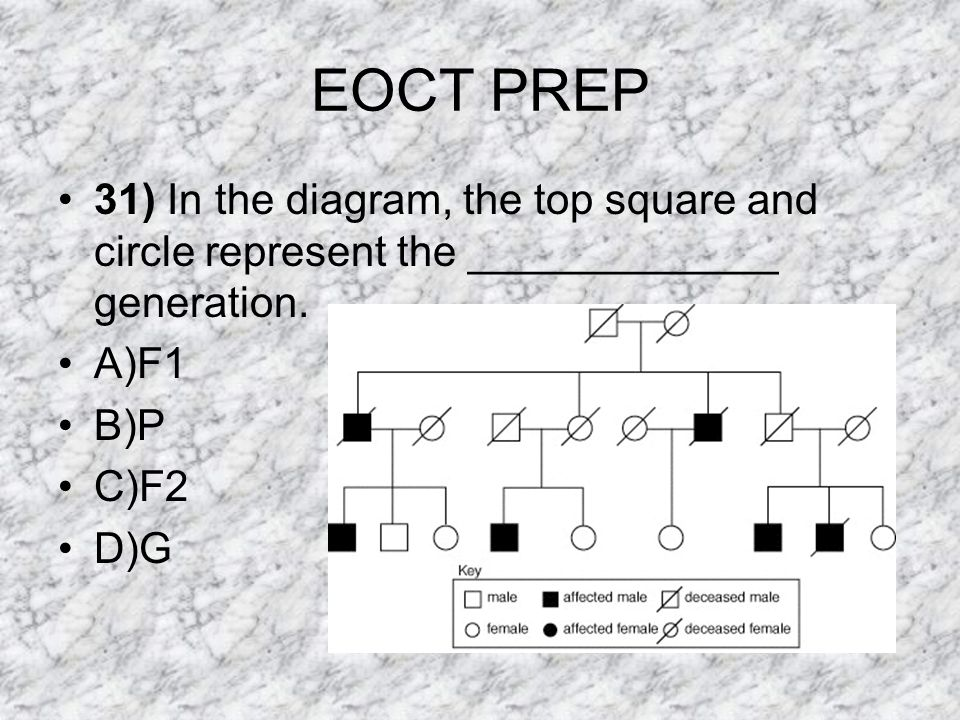 EOCT PREP 31) In the diagram, the top square and circle represent the _____________ generation. A)F1.