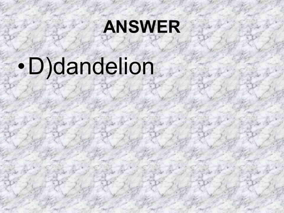 ANSWER D)dandelion