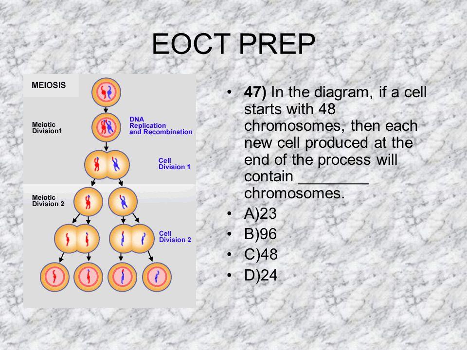 EOCT PREP