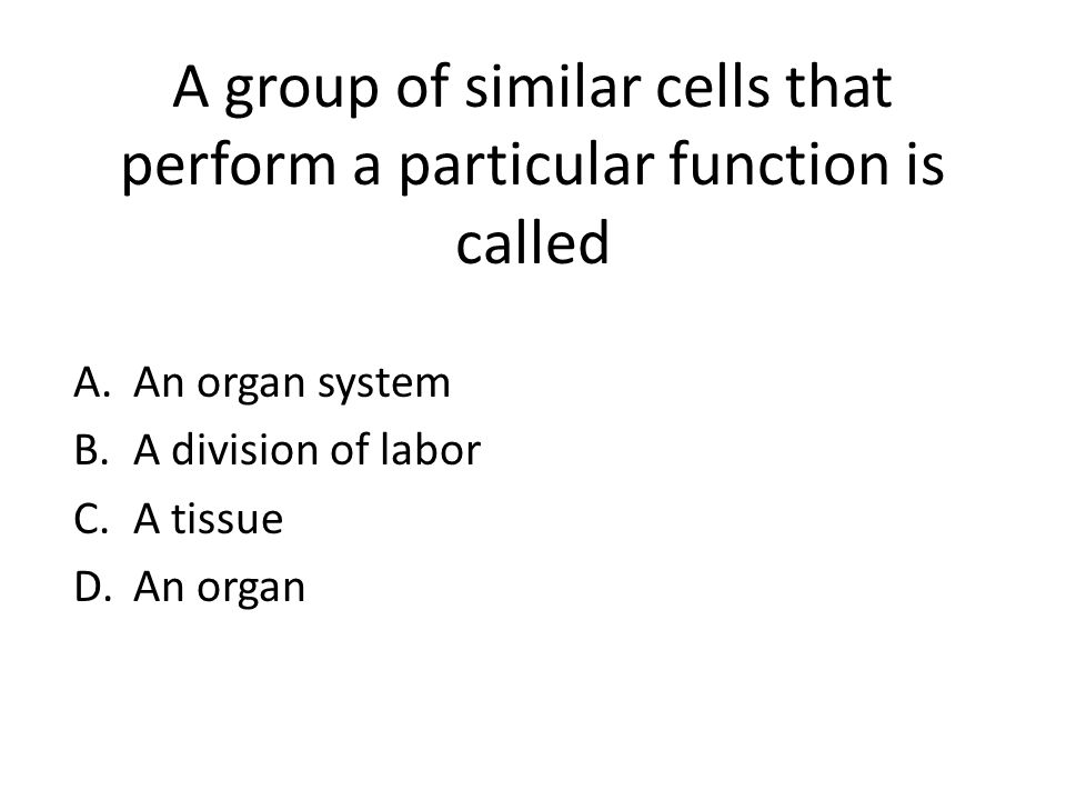 A Group Of Cells That Perform Similar Functions 26