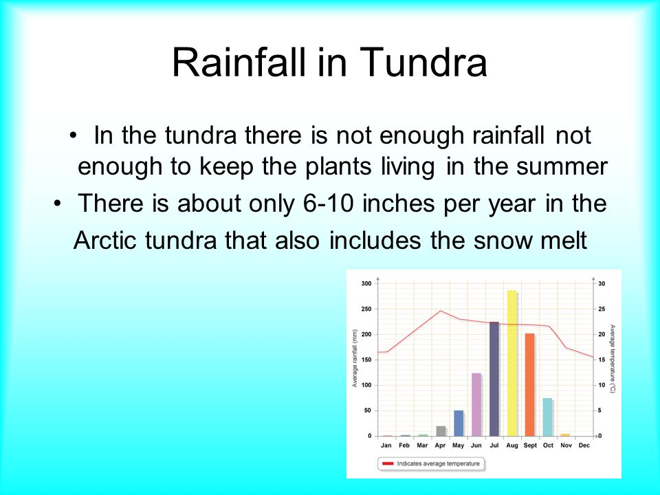 what is the average precipitation of the tundra