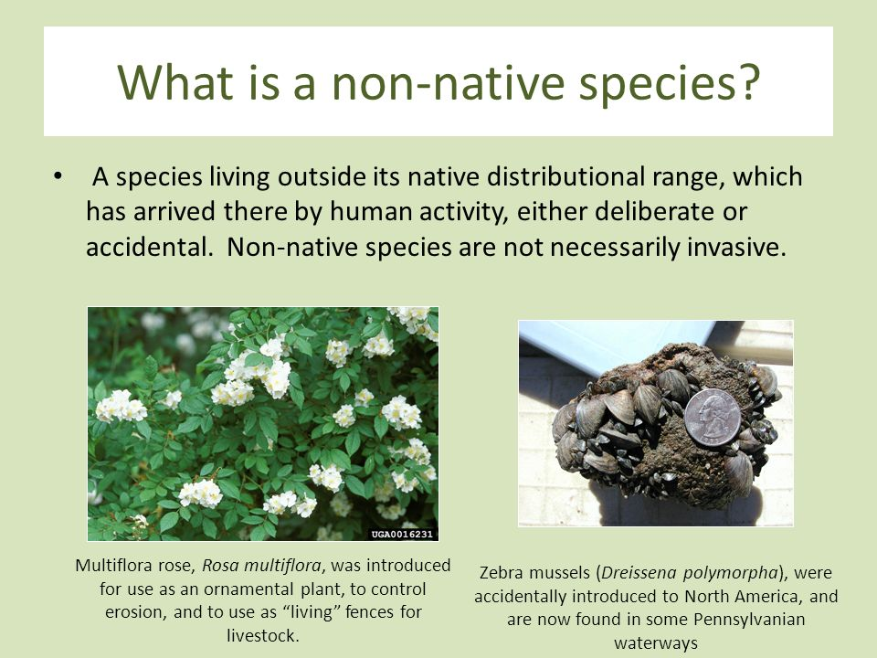 an introduction to the invasive plant species in north america Invasive species related terms: plant  the native species below of light north america is  for introduction or for species that have.