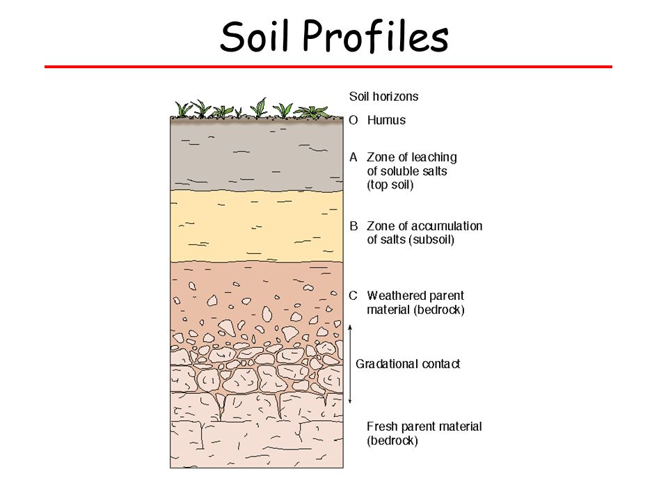 Bell ringer in a short paragraph 3 5 sentences describe for Soil profile video