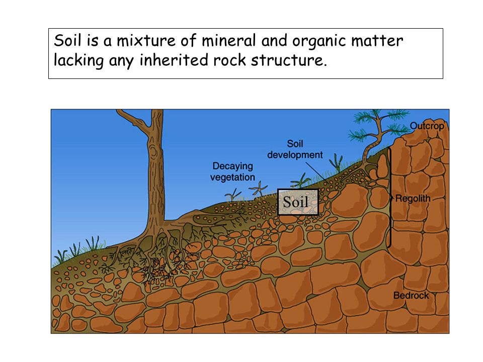 Bell ringer in a short paragraph 3 5 sentences describe for Importance of soil minerals