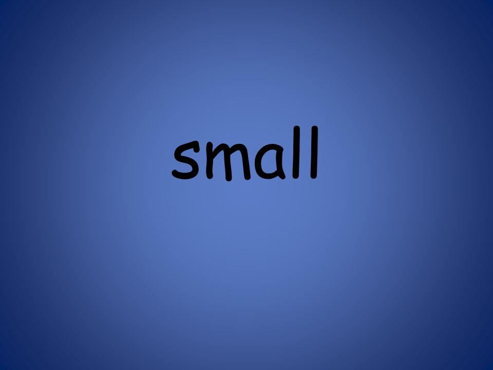 small 125