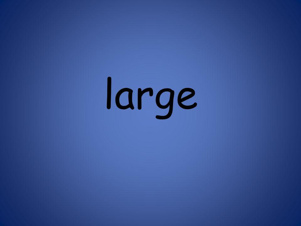 large 125