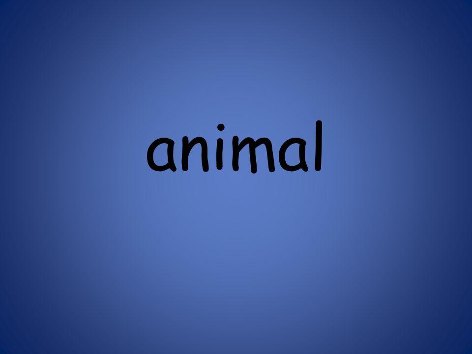 animal 125